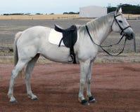 Dieren - vastgespijkerd paard Stock Foto's
