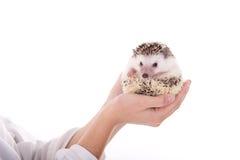 dierenarts royalty-vrije stock afbeeldingen