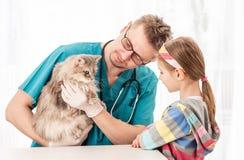 Dierenarts arts die kat controleren ziekten royalty-vrije stock afbeelding
