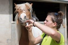 Dierenarts die een behandeling geven aan een poney Stock Fotografie