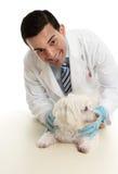 Dierenarts die een huisdierenhond behandelt stock foto
