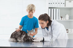 Dierenarts die een kat met zijn eigenaar onderzoeken Stock Fotografie