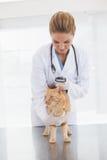 Dierenarts die een kattenhuid controleren Stock Foto
