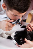Dierenarts die het oor van een kat onderzoeken Stock Foto's