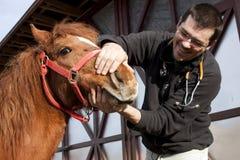 Dierenarts die paard onderzoekt Stock Afbeelding