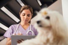 Dierenarts die Tabletcomputer met behulp van tijdens Huisvraag met Hond Royalty-vrije Stock Fotografie