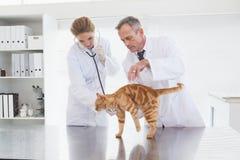 Dierenartsen die een oranje kat onderzoeken Stock Afbeelding