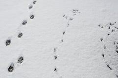 Dierensporen in de sneeuw Royalty-vrije Stock Foto