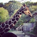 dierentuin stock foto