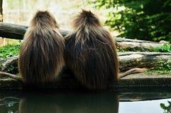 dierentuin Royalty-vrije Stock Afbeeldingen