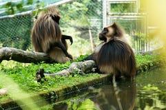 dierentuin Royalty-vrije Stock Foto