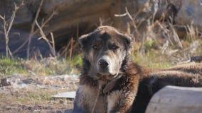 Dierentuindieren, honden stock fotografie
