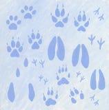 Dierenvoetafdrukken in de sneeuw Stock Afbeeldingen