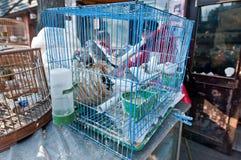 Dierenwinkel stock afbeelding
