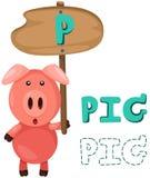 dierlijk alfabet p met varken Royalty-vrije Stock Afbeelding