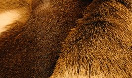 Dierlijk bont /IV Stock Afbeeldingen