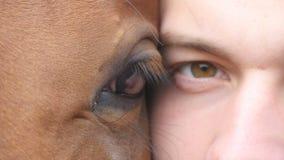 Dierlijk en menselijk oog - paard en mens die samen camera bekijken Sluit omhoog mening van het oog van een mooie bruine hengst stock footage