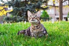 Dierlijk kattenkatje die voor een gang buiten op de zomerdag gaan op leiband stock fotografie