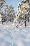 Dierlijk spoor in sneeuw Royalty-vrije Stock Afbeelding