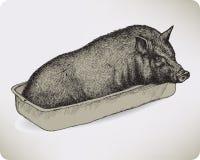 Dierlijk varken, hand-trekt. Vectorillustratie. Stock Afbeelding