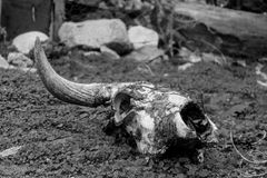 Dierlijk zwart-wit skelet Royalty-vrije Stock Foto's
