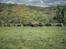 Dierlijke aard en het wildgroep verschillende herbivore dieren stock foto