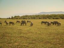 Dierlijke aard en het wildgroep verschillende herbivore dieren stock fotografie