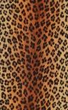 Dierlijke af:drukken Stock Fotografie