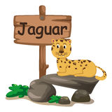 Dierlijke alfabetbrief J voor jaguar Royalty-vrije Stock Afbeelding