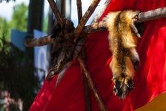 Dierlijke die huiden door inheemse Amerikaanse mensen worden getoond stock foto