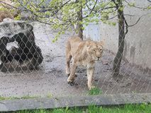 Dierlijke dierentuin Royalty-vrije Stock Afbeeldingen