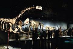 Dierlijke fossielen Stock Afbeeldingen