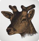 Dierlijke herten met hoornen, hand-trekt Stock Fotografie