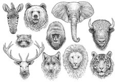 Dierlijke hoofdinzamelingsillustratie, tekening, gravure, inkt, lijnkunst, vector stock illustratie