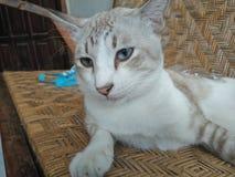 Dierlijke kat Stock Afbeeldingen