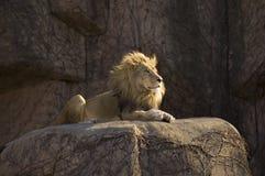Dierlijke koning Stock Afbeeldingen