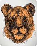 Dierlijke leeuwin, hand-trekt. Vectorillustratie. Royalty-vrije Stock Foto's