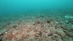Dierlijke overblijfselen op begraafplaats onderwater van Noordpooloceaan stock videobeelden