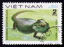 Dierlijke reptielbarbatus van hagedisamphibolurus, circa 1983 Royalty-vrije Stock Foto's