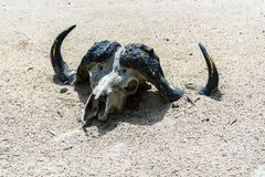 Dierlijke schedel in het zand royalty-vrije stock foto