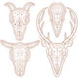 Dierlijke schedels Royalty-vrije Stock Foto's