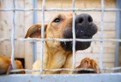Dierlijke Schuilplaats Het inschepen naar huis voor honden Stock Afbeelding
