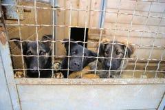 Dierlijke Schuilplaats Het inschepen naar huis voor honden stock foto's