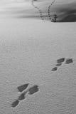 Dierlijke sporen in de sneeuw Stock Afbeeldingen