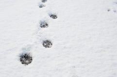 Dierlijke sporen in de sneeuw Stock Foto's