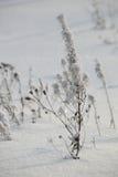 Dierlijke sporen in de sneeuw dichtbij Stock Afbeelding