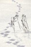Dierlijke sporen in de sneeuw dichtbij Stock Foto's