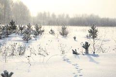 Dierlijke sporen in de sneeuw dichtbij Royalty-vrije Stock Afbeelding
