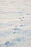 Dierlijke sporen in sneeuw Royalty-vrije Stock Afbeeldingen