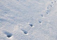 Dierlijke sporen in sneeuw Royalty-vrije Stock Afbeelding